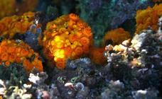10 especies marinas que puedes ver en el litoral de Alborán