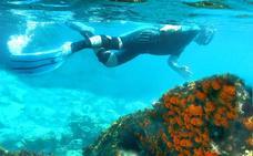 CORAL NARANJA Y 10 especies marinas que puedes ver en el litoral granadino