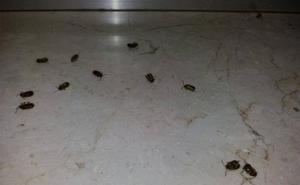 «Pocos» restos de la plaga de insectos que ha afectado al Médico Quirúrgico