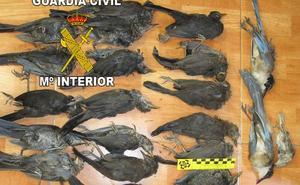 La Guardia Civil investiga a un vecino de Bailén por usar artes prohibidas para cazar aves