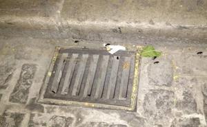 Vecinos de San Juan de Dios alertan de cucarachas una semana después de la desinsectación