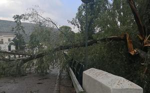 Las fuertes rachas de viento de una tormenta causan daños en la pedanía de Mogón