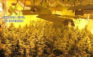 La Guardia Civil interviene 10.275 plantas de marihuana en julio en la provincia de Granada