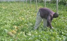 Las inspecciones de la Junta confirman la buena calidad del melón y la sandía