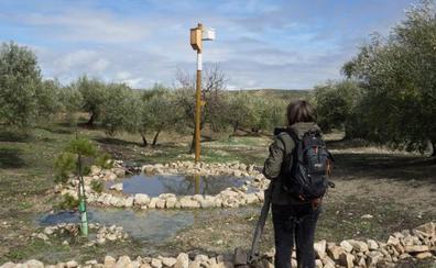 El 90% de los agricultores jienenses, a favor de la biodiversidad en sus olivares