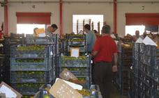 Asaja: «No es normal que el agricultor cobre menos de lo que marca el precio de retirada»