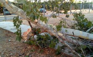 Alumnos de la Escuela de Idiomas critican que se talen árboles para hacer un aparcamiento