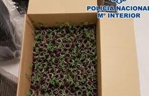 Detenido en Granada cuando llevaba 331 esquejes de plantas de marihuana