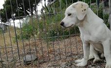 Todo el verano rescatando perros abandonados bajo el sol de Andalucía