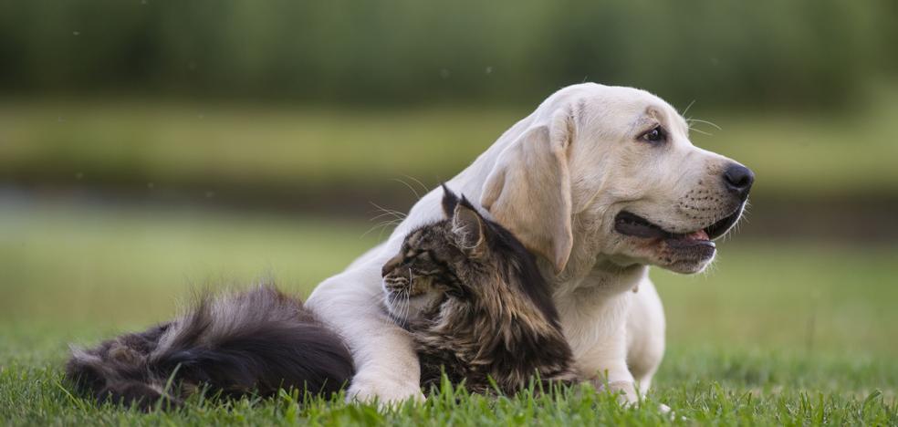 Aumentan las sanciones por tener animales domésticos de forma ilícita en Jaén