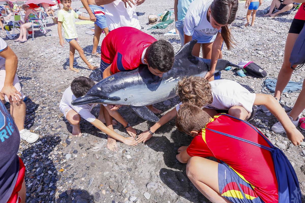 ¿Cómo socorrer a un delfín en la orilla?