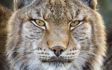 Estas son las 32 especies que ya han desaparecido en España