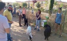 Vegas del Genil enseñará a los perros del municipio a superar el miedo a los petardos