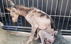 «El perro estaba prácticamente muerto, es solo huesos y piel»