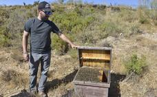 Apicultores de Almería denuncian el robo un millar de colmenas