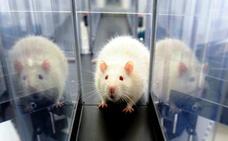 Las condiciones de los animales de laboratorio mejoran en los últimos siete años