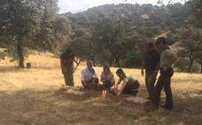 Sueltan en Jaén más de 4.300 perdices rojas este año para preservar el lince o el águila imperial