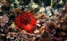 25 millones para la protección y evaluación del medio marino