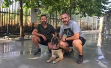 Apu, el perro policía, se jubila
