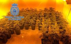 Una alerta por el incumplimiento de una orden de alejamiento desvela una plantación de droga en Granada