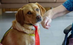 Granada busca familias adoptivas para 80 mascotas con una feria