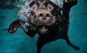 Lila, la perra que limpia los mares