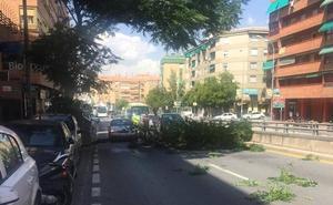 Una rama bloquea el tráfico en la avenida de Andalucía