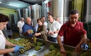 El sector vitivinícola de Granada logra 6.200 toneladas de uva y genera 50.000 empleos