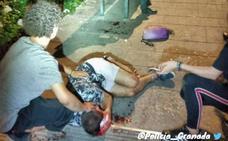 Un joven sufre una herida en la cabeza tras caerse de una estatua en la Avenida de la Constitución