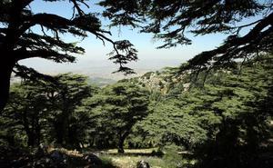 El símbolo del Líbano se muere
