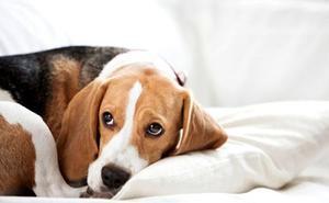 5 consejos para ayudar a tu perro a vencer el miedo a las tormentas