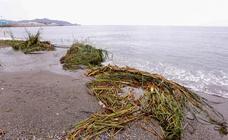 Cañas y ramas de árboles invaden la playa de Poniente tras las lluvias