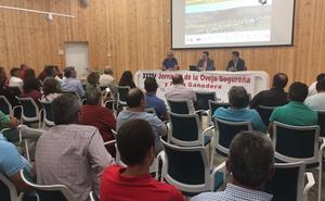 Santiago Pontones subraya el cordero segureño como fuente de riqueza y empleo