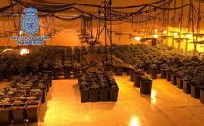 Desmantelada una plantación de marihuana en un restaurante de El Puche y detenidas dos personas