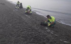 Aparecen 300 kilos de peces muertos en la playa de Almuñécar