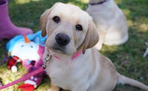 Un estudio demuestra a cuántos años equivale realmente la edad de un perro