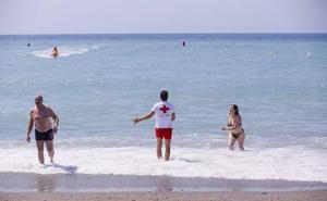 Investigadores analizarán el origen de las plagas de medusas para evitar su impacto en el turismo
