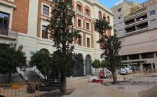 Los magnolios que había ante la catedral llegan a Deán Mazas