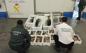 Intervenidos 100 kilos de caballa en una nave industrial de Guarromán por carecer de etiquetado