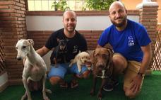 Terapias caninas, música y tratamiento farmacológico para luchar contra el Alzheimer