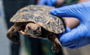 Los médicos extraen una tortuga de la vagina de una mujer en Tenerife