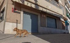 La Guardia Civil busca a un atracador que hirió a tiros al dueño de un bar de Calicasas tras robar la recaudación