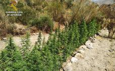 Vuelven a detener al pastor que 'reforestó' con 'maría' una zona serrana calcinada en Lújar
