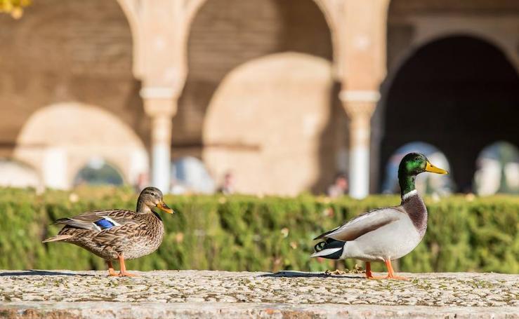 La fauna que habita en la Alhambra