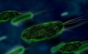 Una cuarta parte de los microbios de la Tierra siguen desconocidos