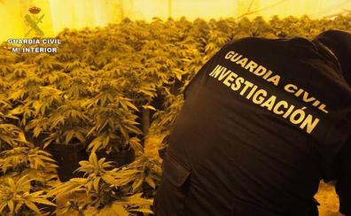 La Guardia Civil ha intervenido más de 18.000 plantas de cannabis sativa en septiembre