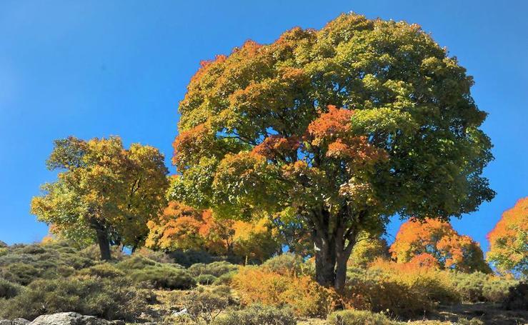 Uno de los rincones más hermosos del Parque Nacional de Sierra Nevada