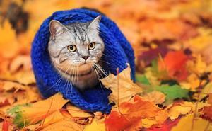 Así debes cuidar a tu gato para que no sufra en otoño