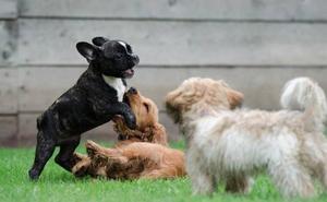 Llega el 'boom' de las guarderías de perros: ¿cómo escoger la mejor?