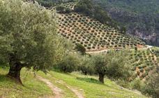 Un estudio revela la gran biodiversidad presente en las zonas de olivar